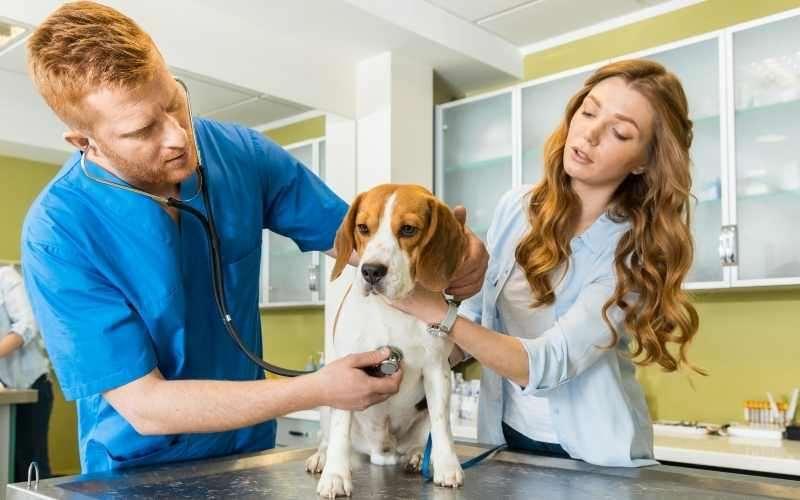 Malassezia del cane