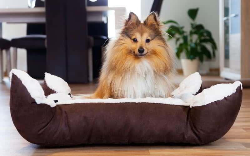 migliori cucce per cani
