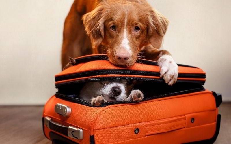 Nel post di oggi ti spieghiamo come viaggiare con il cane nelle varie circostanze e con vari mezzi di trasporto.